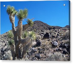 Acrylic Print featuring the photograph Black Mountain Yucca by Alan Socolik
