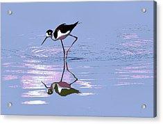 Acrylic Print featuring the photograph Black Neck Stilt by Tom Janca