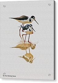 Black Neck Stilts Togeather Acrylic Print
