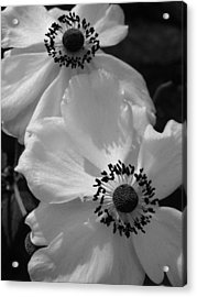 Black On White Acrylic Print by Cheryl Hoyle