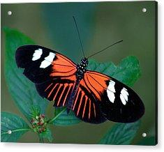 Black Orange And White Acrylic Print by Karen Stephenson