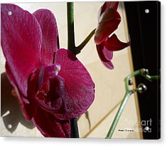 Acrylic Print featuring the photograph Black Orchid by Ramona Matei