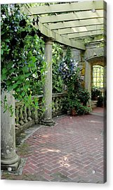 Acrylic Print featuring the photograph Black Petunias by Natalie Ortiz