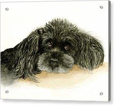 Black Poodle Dog Acrylic Print by Nan Wright