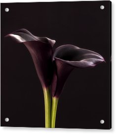 Black And White Purple Flowers Art Work Photography Acrylic Print