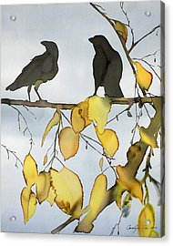 Black Ravens In Birch Acrylic Print