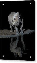 Black Rhinoceros At Night Acrylic Print by Tony Camacho/science Photo Library