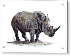 Black Rhinoceros Acrylic Print by DiDi Higginbotham