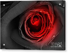 Black Rose Acrylic Print