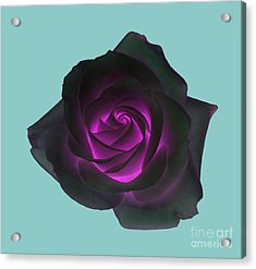 Black Rose With Purple Centre On Pale Turquoise Background. Acrylic Print by Rosemary Calvert