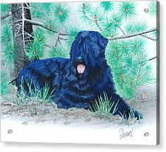 Black Russian Terrier Acrylic Print by Ferrel Cordle