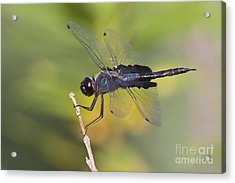 Acrylic Print featuring the photograph Black Saddlebags by Bryan Keil