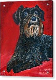 Black Schnauzer Pet Portrait Prints Acrylic Print by Shelia Kempf