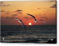 Black Skimmers At Sunset Acrylic Print by Tom Janca