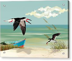 Black Skimmers Fishing Acrylic Print by Anne Beverley-Stamps
