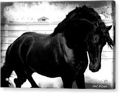 Black Stallion Acrylic Print