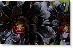 Black Succulent Acrylic Print