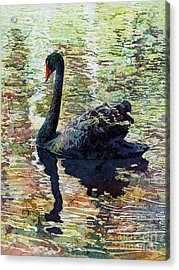 Black Swan Acrylic Print by Hailey E Herrera