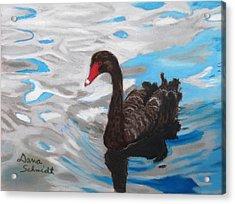 Black Swan Swimming Lake Eola Acrylic Print