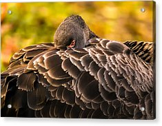Black Swan Acrylic Print by Yuri Fineart