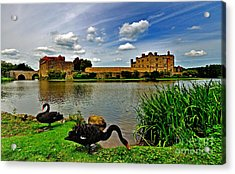 Black Swans At Leeds Castle II Acrylic Print