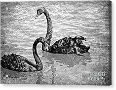 Black Swans - Black And White Textures Acrylic Print by Carol Groenen