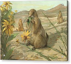 Black-tailed Prairie Dogs Acrylic Print by ACE Coinage painting by Michael Rothman