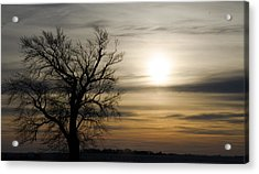 Black Tree At Sunrise Acrylic Print by Dan  Meylor