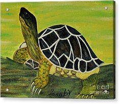 Black Turtle. Inspirations Collection. Acrylic Print