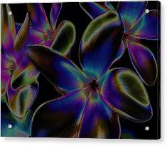 Black Velvet Frangi Acrylic Print by Rebecca Flaig