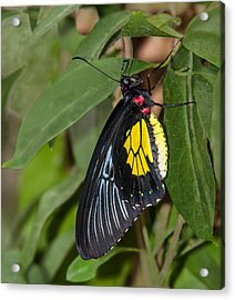 Black Yellow And Red Acrylic Print by Karen Stephenson