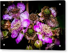 Acrylic Print featuring the photograph Blackberry Flower by Edgar Laureano