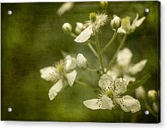 Blackberry Flowers With Textures Acrylic Print