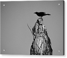 Acrylic Print featuring the photograph Blackbird by David Mckinney