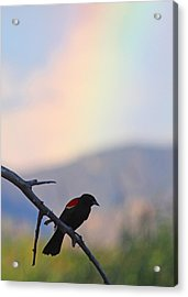 Blackbird In Front Of Rainbow Acrylic Print