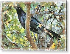 Blackbird Acrylic Print by Lorri Crossno