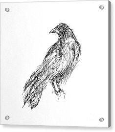 Acrylic Print featuring the drawing Blackbird  by Nicole Gaitan