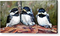 Blackcapped Chickadee Babies Acrylic Print by Suzanne Schaefer