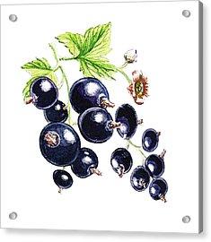Acrylic Print featuring the painting Blackcurrant Berries  by Irina Sztukowski