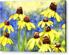 Blackeyed Beauties Acrylic Print