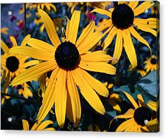 Acrylic Print featuring the photograph Blackeyed Susan Abstract by Mary Bedy