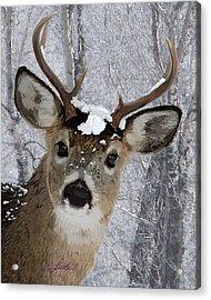 Blacktail Buck In Snow Acrylic Print