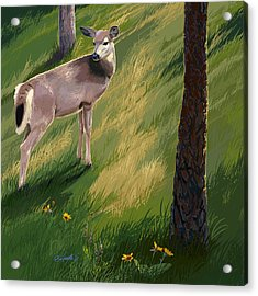 Blacktail Doe In Springtime Acrylic Print
