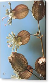 Bladder Camion Acrylic Print by Rebeka Dove