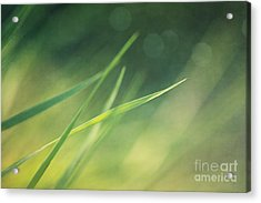 Blades Of Grass Bathing In The Sun Acrylic Print by Priska Wettstein