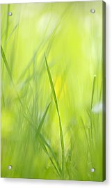Blades Of Grass - Green Spring Meadow - Abstract Soft Blurred Acrylic Print