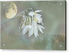 Acrylic Print featuring the photograph Blanche by Elaine Teague