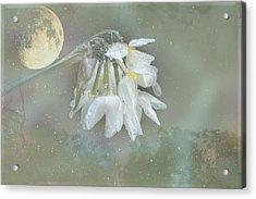 Blanche Acrylic Print by Elaine Teague