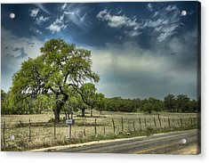 Blanco Tree Acrylic Print by Wayne Kondoff