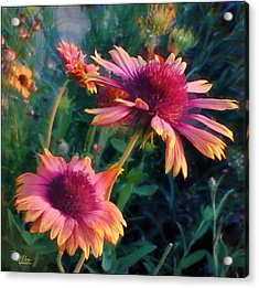 Blanket Flowers At Sunset Acrylic Print